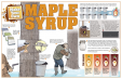 Make Your Own Maple Syrup