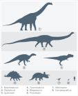 Dinosaurs Size Comparison with a Human