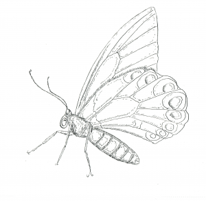 advanced animal coloring page 10 - Advanced Coloring Pages Butterfly