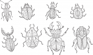 advanced insect coloring page - Insect Coloring Page