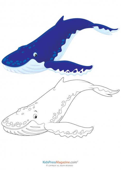Coloring Match Blue Whale Kidspressmagazine Com
