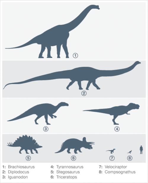 Dinosaurs Size Comparison with a Human - KidsPressMagazine.com