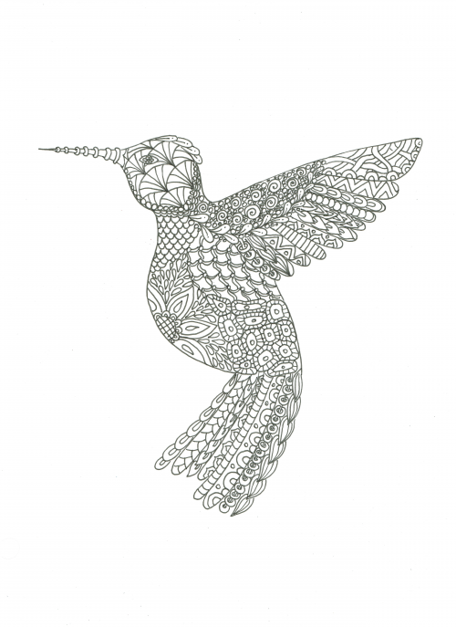 Hummingbird Animal Coloring Pages. Get it now  Advanced Animal Coloring Page 7 KidsPressMagazine com