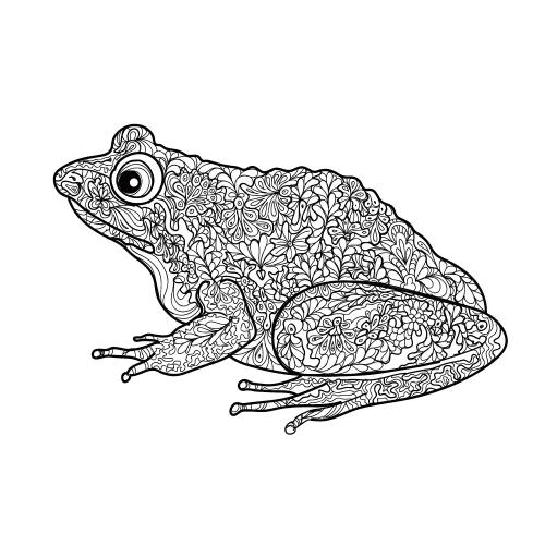 Free Frog Adult Coloring Page Kidspressmagazine Com