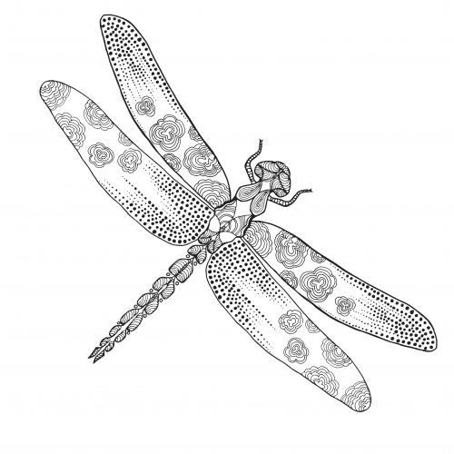 Free Dragonfly Adult Coloring Page - KidsPressMagazine.com