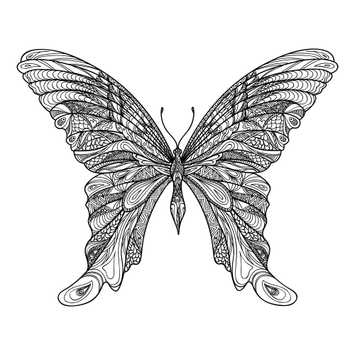 Adult coloring pages amazing butterfly for Coloring pages of butterflies for adults