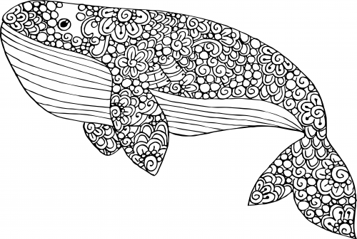 Whale Coloring Pages | 336x500