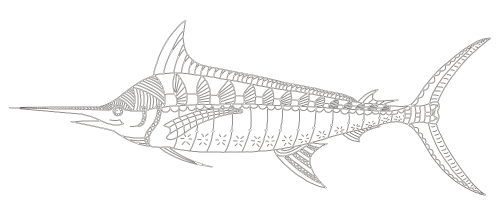 blue marlin fish coloring pages sketch coloring page