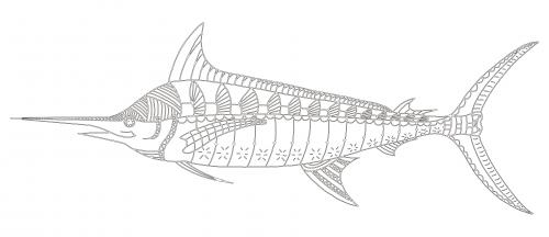Marlin Fish Coloring Page KidsPressMagazine