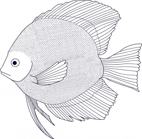Black and White Fish Coloring Page - KidsPressMagazine.com