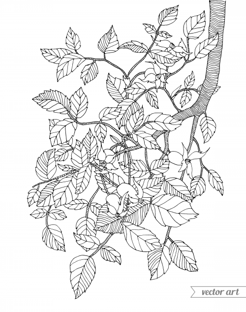 Branch Coloring Page
