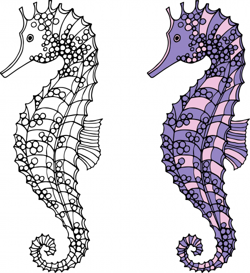 baby seahorses coloring pages - photo#45