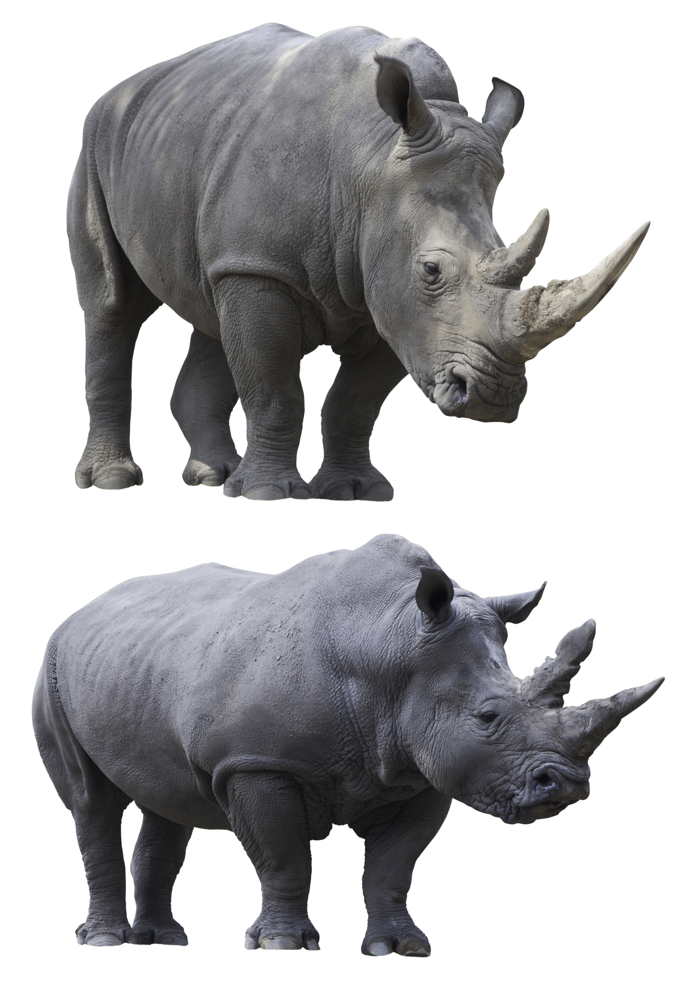 Endangered Species Facts Kidspressmagazine Com