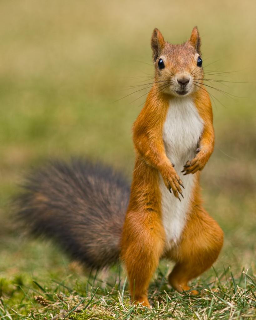 Squirrel Facts