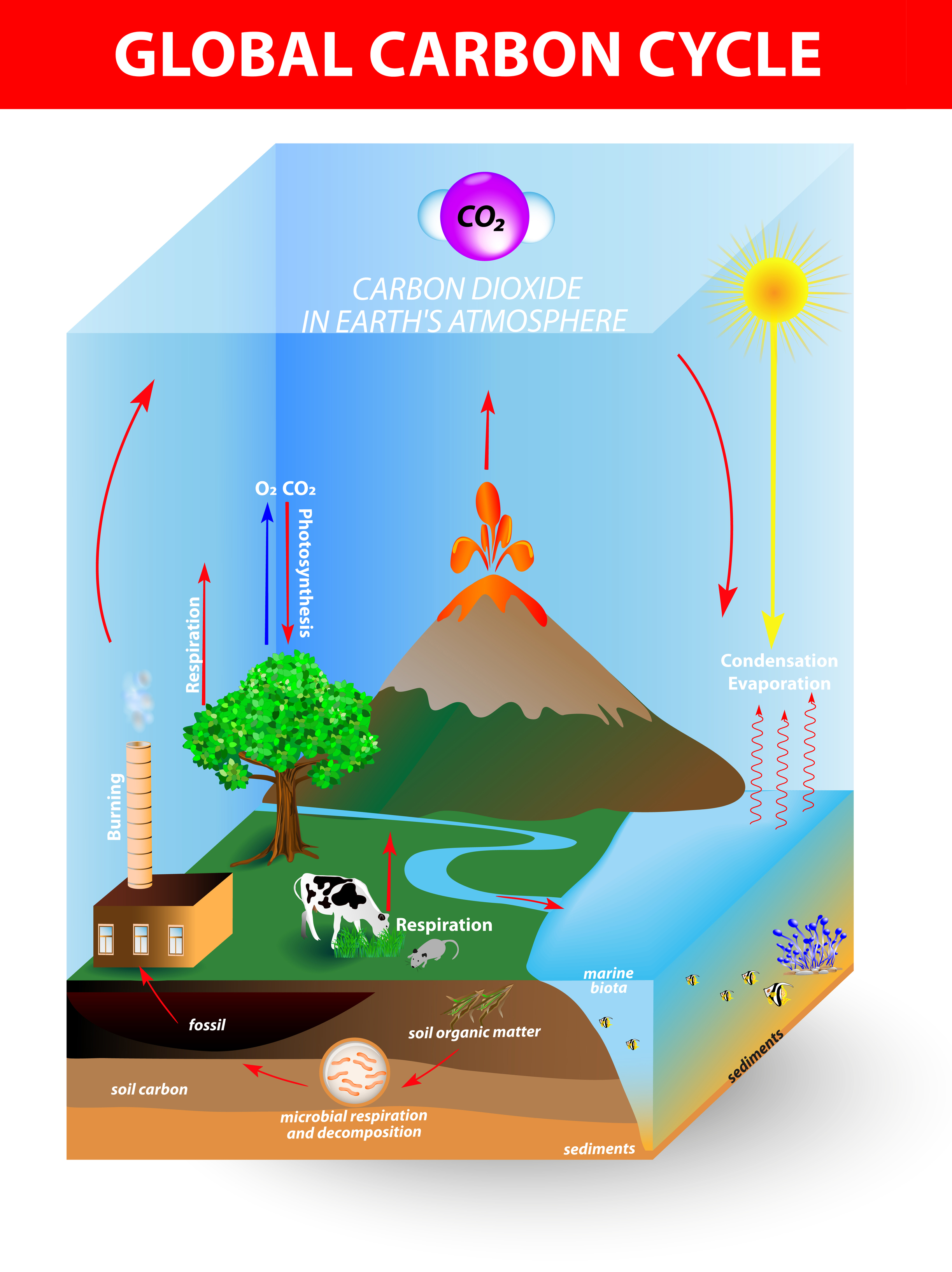 balance sheet of the carbon cycle The carbon cycle is the key factor in maintaining the balance of carbon dioxide in  the  plants photosynthesise, taking carbon from the atmosphere in the form of.