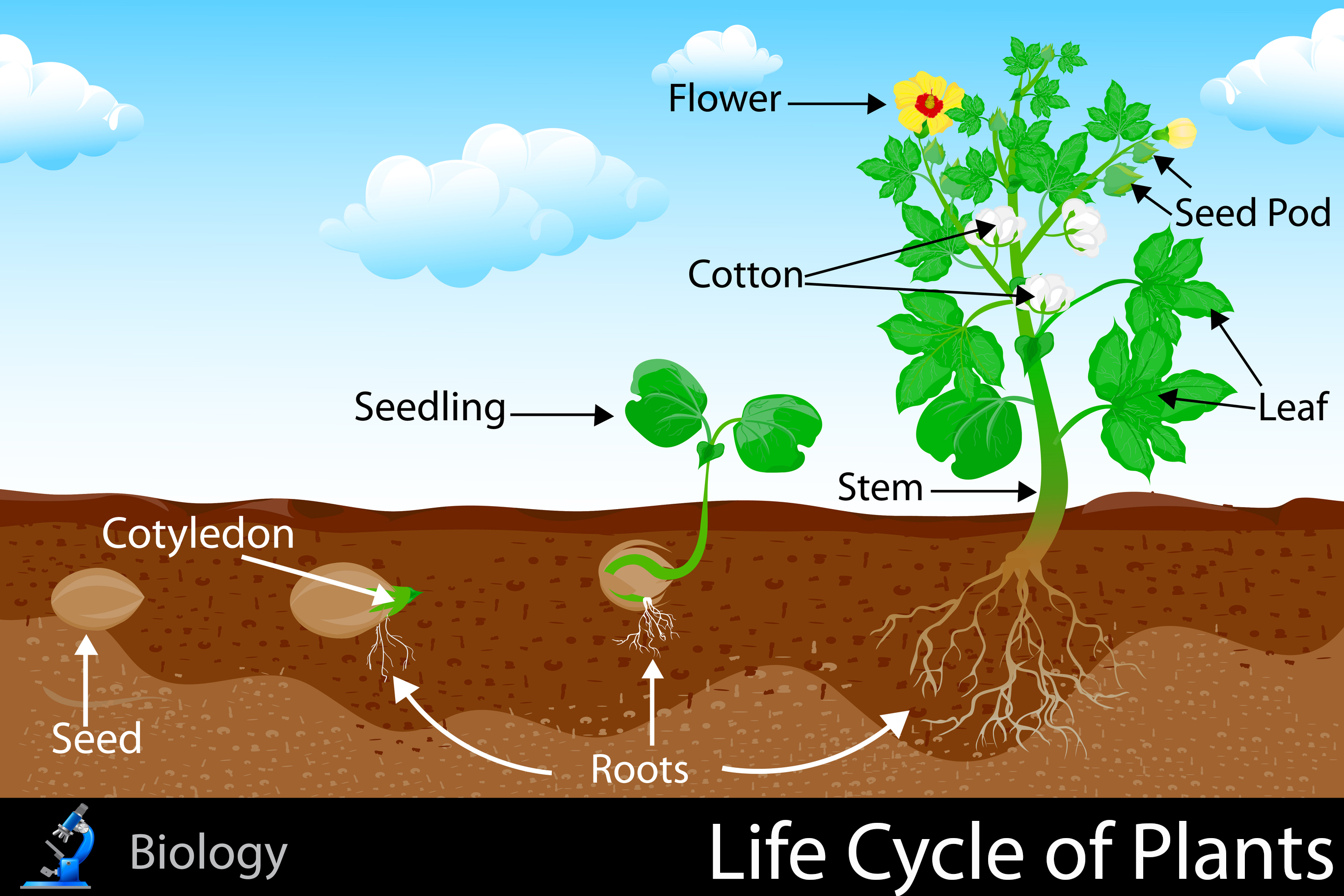 Life cycle of plants for Soil life cycle