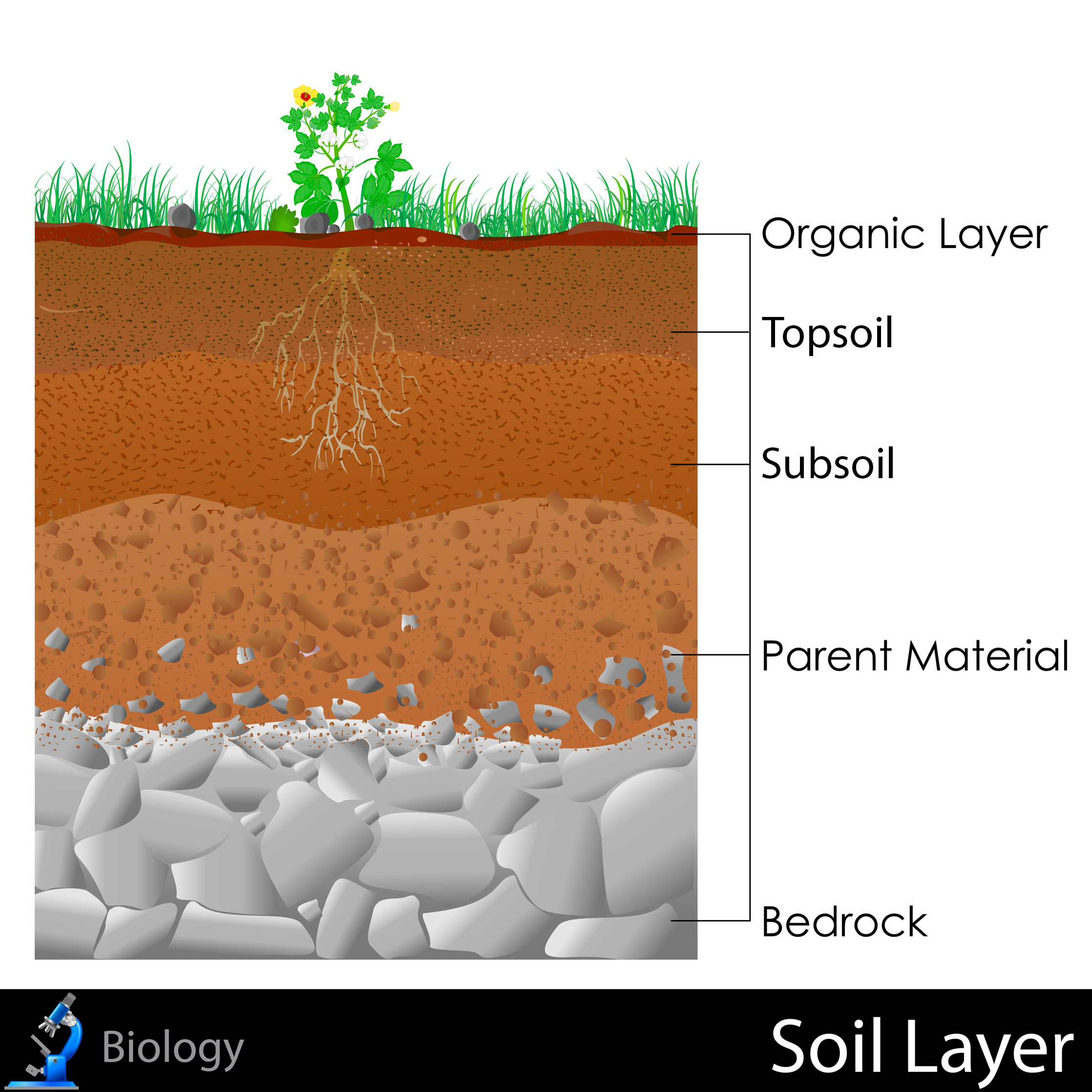 Soil layers for 4 parts of soil