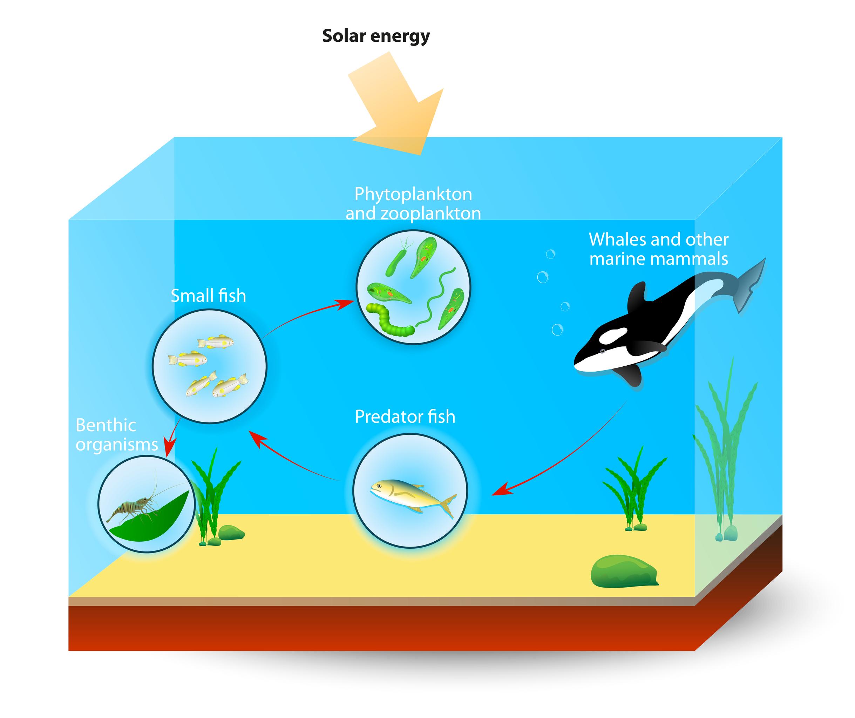Marine Food Webs - Kid...
